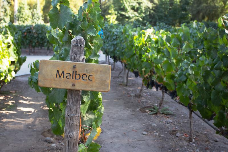 IMAGE international malbec day