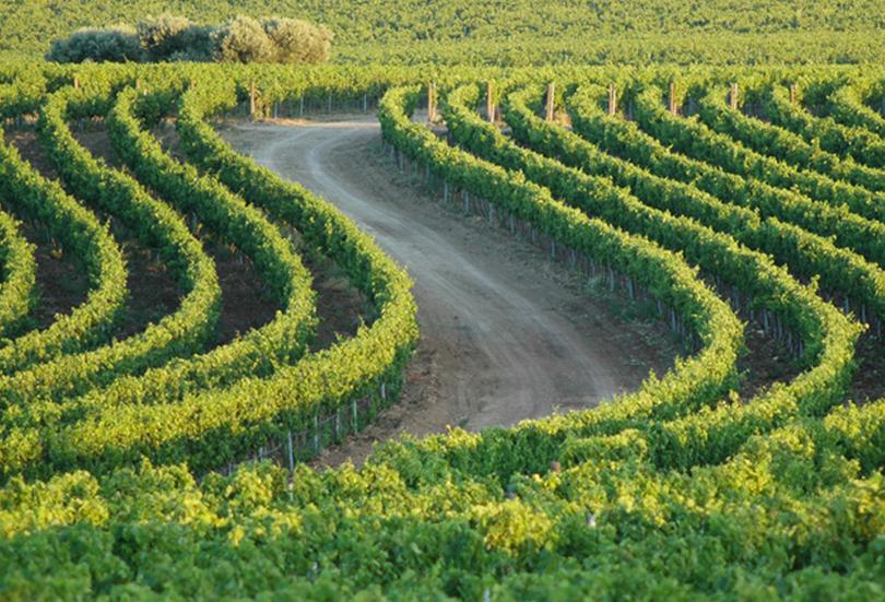 יין אורגני- זה רק טבעי