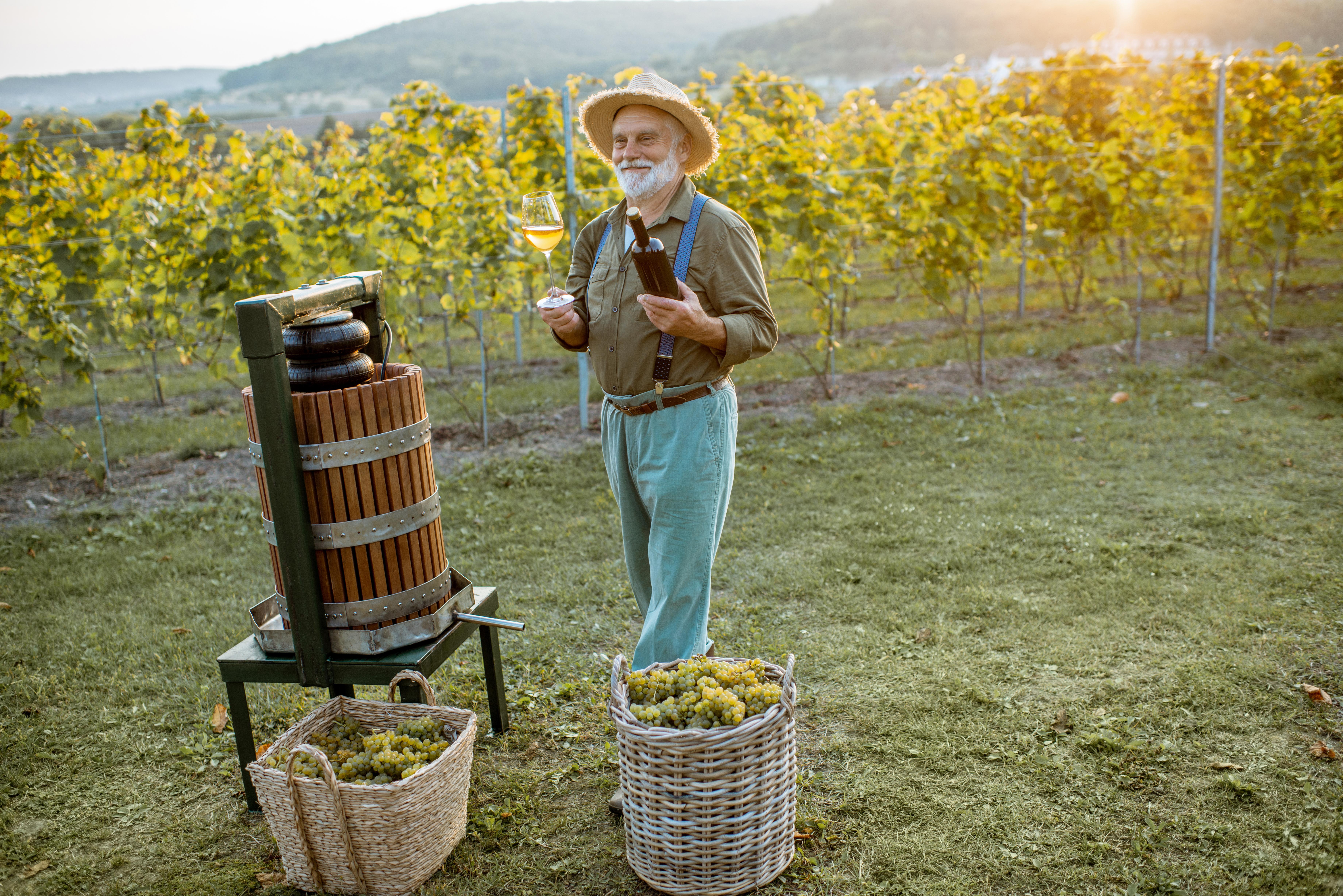 יום היין הבינלאומי - כל מה שאתם צריכים לדעת